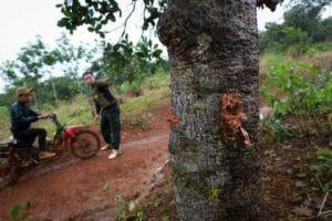Bắt tạm giam giám đốc công ty Long Sơn vụ bảo vệ rừng bị bắn