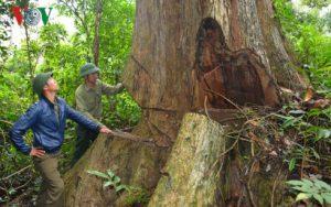 Không xin được gỗ lâm tặc chém bị thương nhân viên bảo vệ rừng